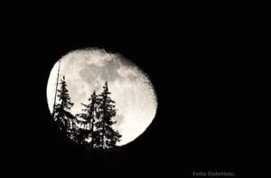 cand-iti-doresti-cu-adevarat-luna-de-pe-cer-descoperi-frumosul-de-langa-tine