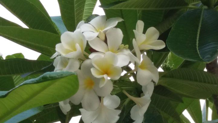 Mindfulness la Thanyapura (Thailanda)